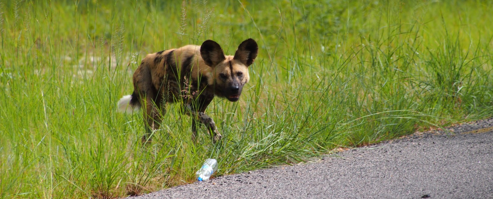 Painted dog and a plastic bottle